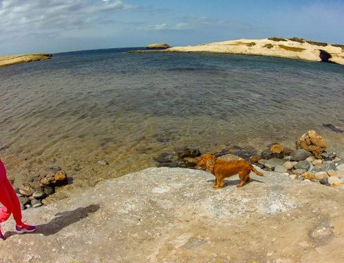 Spiagge dog-friendly nord Sardegna