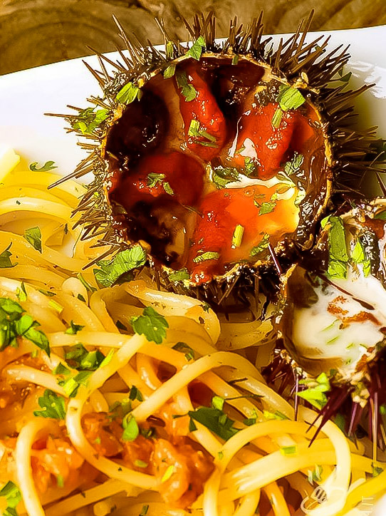 Spaghetti ai ricci di Alghero